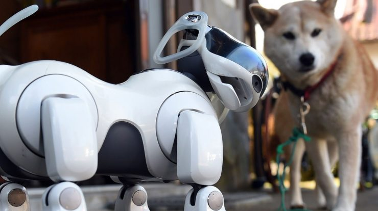 Advances in dog technology that could change your life